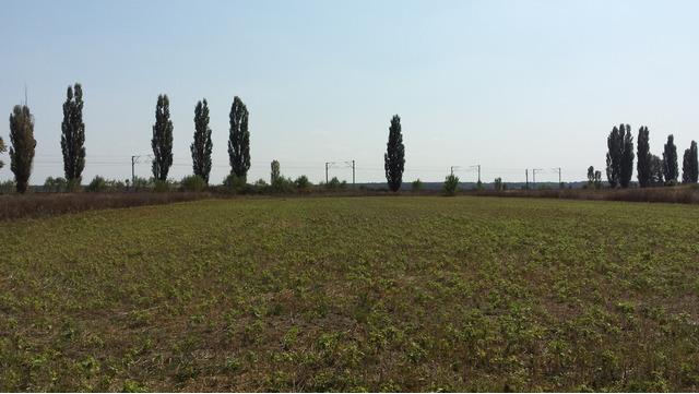 Teren de Vanzare Intravilan 3450 Darza/Buftea